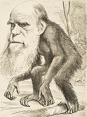 Caricature darwin 1