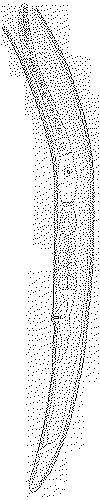 Pratylenchus scribneri 5674
