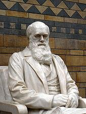 Statue darwin 1